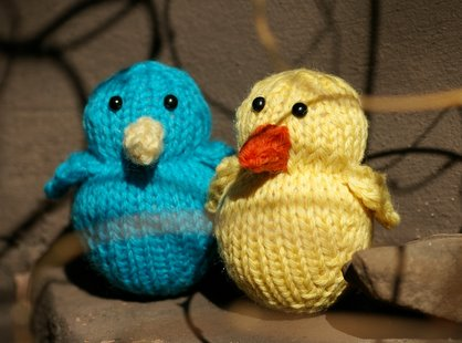 A Bluebird and a Chick